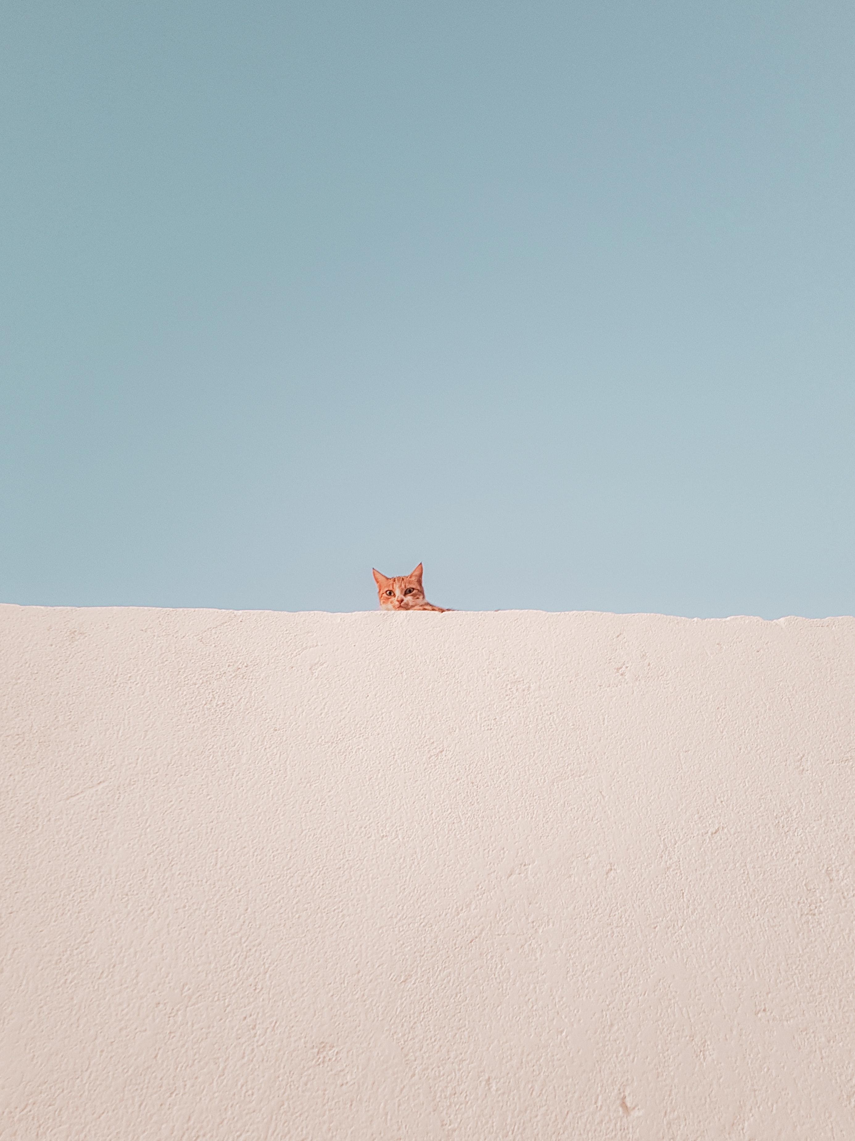 Kokį kačių kraiką pasirinkti? Populiariausių tipų aprašymas