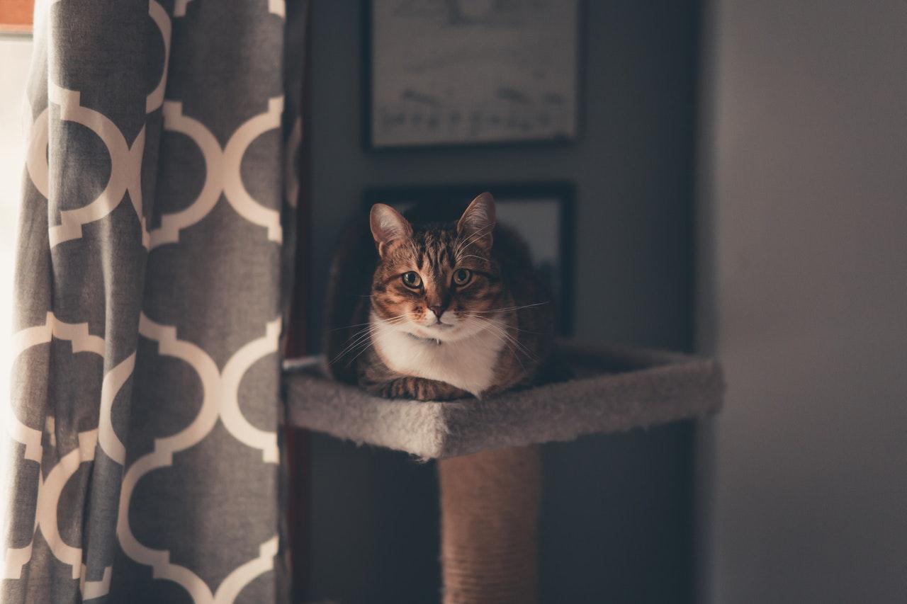 Kaip lengvai pasidaryti draskyklę katei?