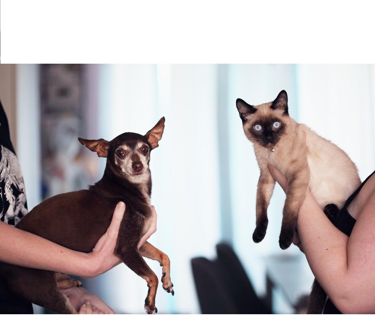 Gyvūnų elgesio specialistas - profesija iš aistros