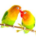 Vidutinių ir didelių paukščių maistas