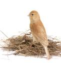 Paukščių nameliai ir lizdai