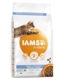 IAMS For Vitality Dental sausas maistas suaugusioms katėms 3 kg burnos higiena