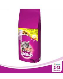 WHISKAS Junior 14kg - sausas kačių maistas su vištiena + Dr PetCare MAX Biocide Collar Antkaklis nuo blusų ir vabždžių katėms 43 cm NEMOKAMAI
