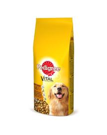 PEDIGREE Adult 15kg (vidutinės veislės) - sausas šunų maistas su jautiena ir paukštiena + Dr PetCare MAX Biocide Collar Antkaklis nuo blusų ir vabždžių vidutinės veislės šuniui60 cm NEMOKAMAI