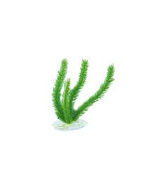 """AQUAEL Plastikinis augalas Ap-048 8"""" (20Cm)"""