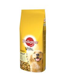 PEDIGREE Adult 15kg (vidutinės veislės) - sausas šunų maistas su paukštiena ir daržovėmis + Dr PetCare MAX Biocide Collar Antkaklis nuo blusų ir vabždžiųvidutinės veislės šuniui60 cm NEMOKAMAI