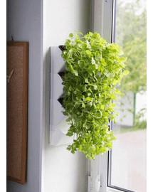 Aquael Versa Garden Herbs sistema žolelėms auginti