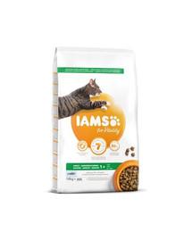 IAMS for Vitality suaugusioms katėms su vandenyno žuvimis 20 kg (2 x 10 kg)