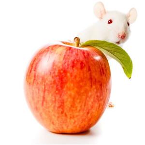 Pelių ir smiltpelių maistas