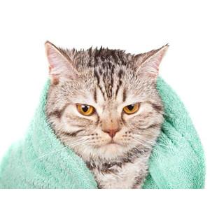 Priemonės kačių maudymui