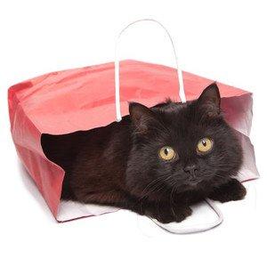 Kačių kelionių įranga