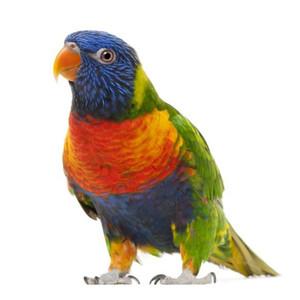Egzotinių paukščių maistas