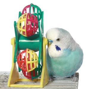 Veidrožiai paukščiams