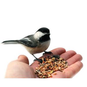 Laukininių paukščių maistas
