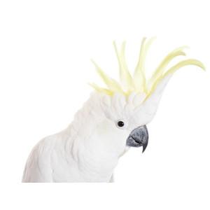Antiparazitinės priemonės paukščiams