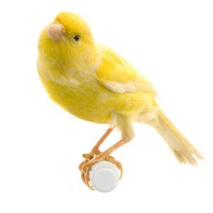 Paukščių snapo ir nagų priežiūra