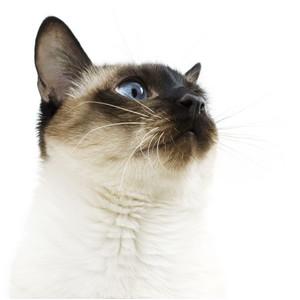 Kačių kaulams ir sąnariams
