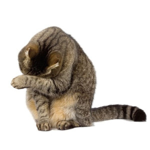 Maišeliai kačių ekskrementams