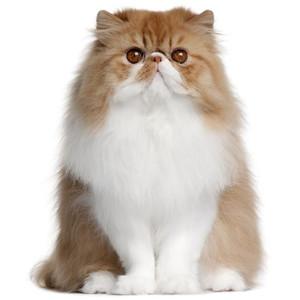 Kačių kirpimo žirklės