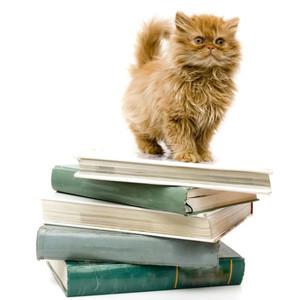 Knygos apie kates