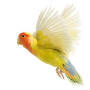 Medžiagos paukščių lizdams