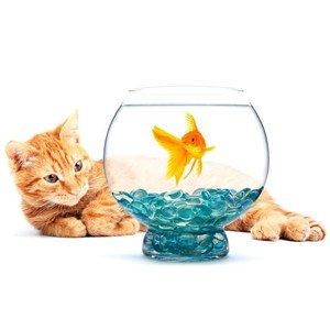 Akvariumų fonai