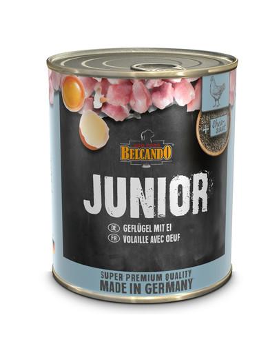 BELCANDO Junior vištiena + kiaušinis 800 g