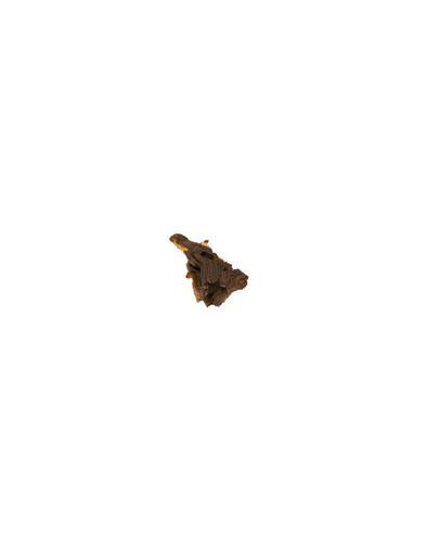 Trixie Mopani šaknis - 1 maža