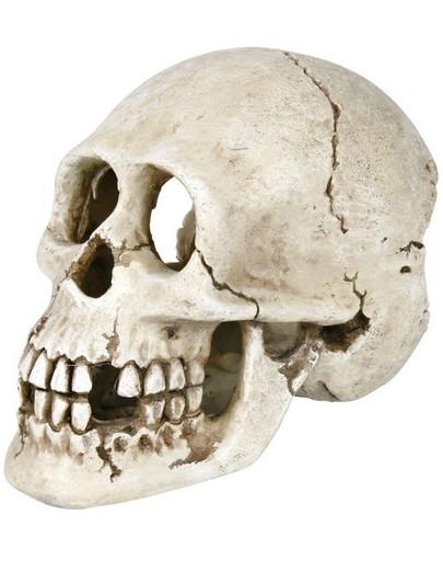 Trixie dekoracija kaukolė 15 cm