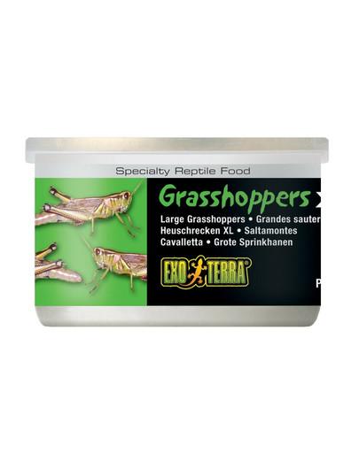 EXO TERRA Grasshoppers konservuoti žiogai XL 34 g